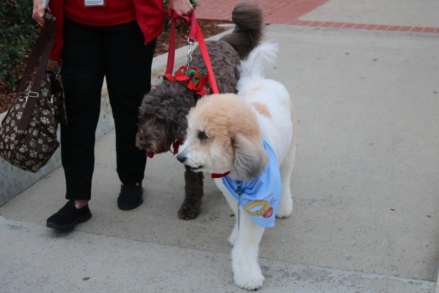 Following the shooting at a local country club and fires directly after, ASMC worked with President Sanchez to get therapy dogs on campus. Photo credit: Michelle De Leon