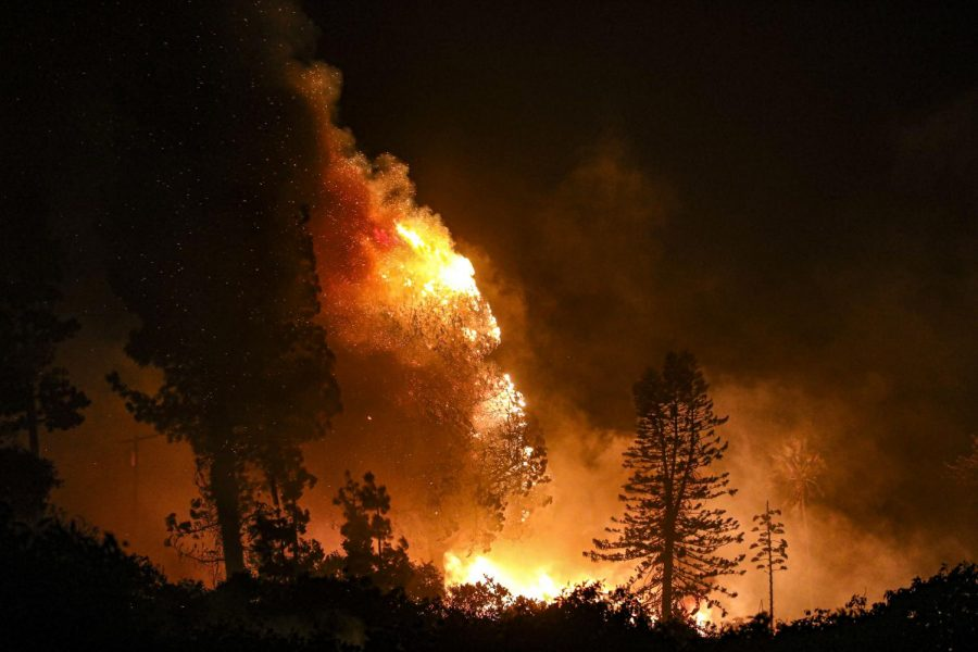 The Maria Fire engulfs a tree in flames after burning down a structure underneath it  just outside of Camarillo on W La Loma Ave, on Friday, Nov. 1. Photo credit: Ryan Bough