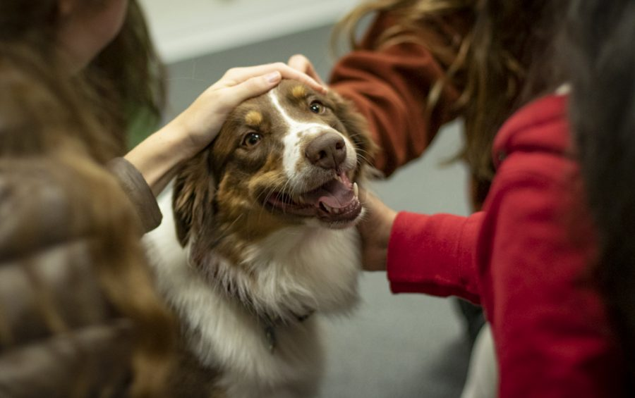 Therapy dog Rocket receives plenty of pets during De-Stress Fest on Wednesday, Dec. 4, in the ASMC offices. This was Rocket's first day as a therapy dog according to owner Kim Ellis. Photo credit: Evan Reinhardt