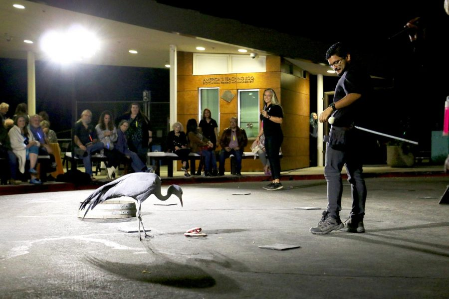 EATM student Anthony Portillo, right, and Delilah, a Blue Crane, perform for the audience at Rendezvous at the Zoo, on Saturday, Nov. 9. Photo credit: Dominic D'Amico