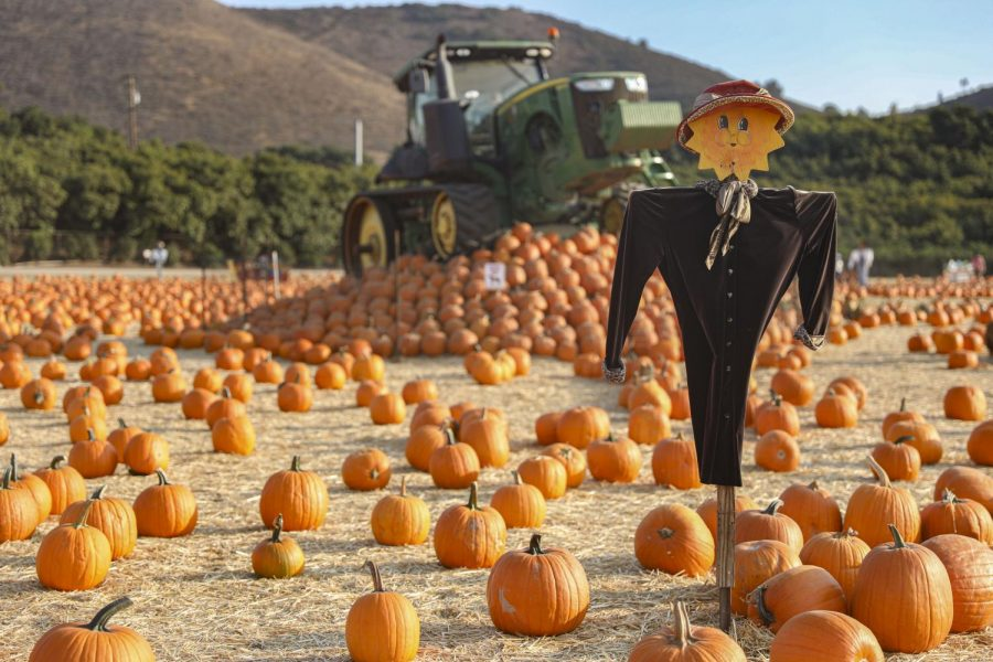Underwood+Family+Farm%27s+Fall+Harvest+attracts+hundreds+of+visitors+to+view+and+pick+pumpkins+on+Thursday%2C+Oct.+15+in+Moorpark%2C+CA.+The+40-acre+farm+allows+for+families+to+maintain+social+distancing+while+also+enjoying+the+farm.+Photo+credit%3A+Ryan+Bough
