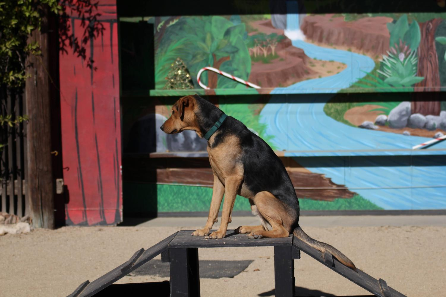 Buzz, the domestic dog was presented in the show at America's Teaching Zoo Theater.