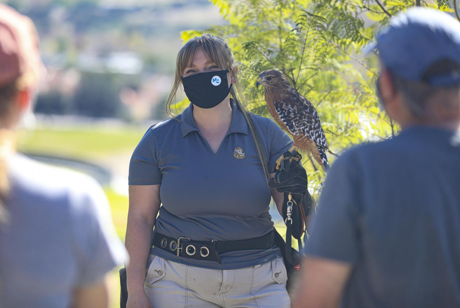 Kristina Ruiz, a second year EATM student, showcases Cheyenee a red-shouldered hawk to visitors at America's Teaching Zoo in Moorpark, CA on Saturday, Feb. 6, 2021.